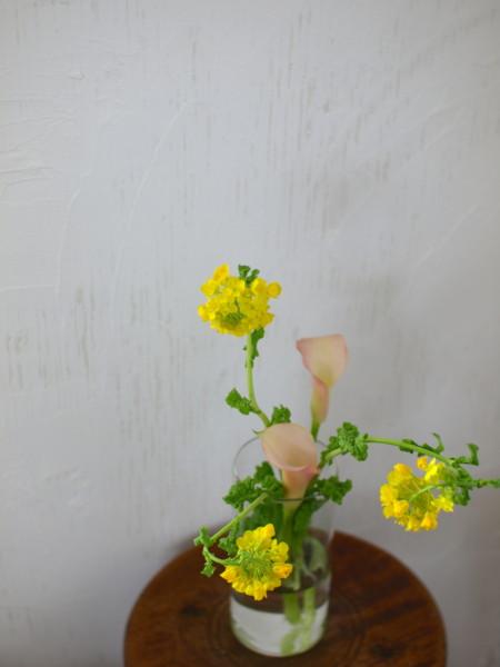 菜の花 カラー