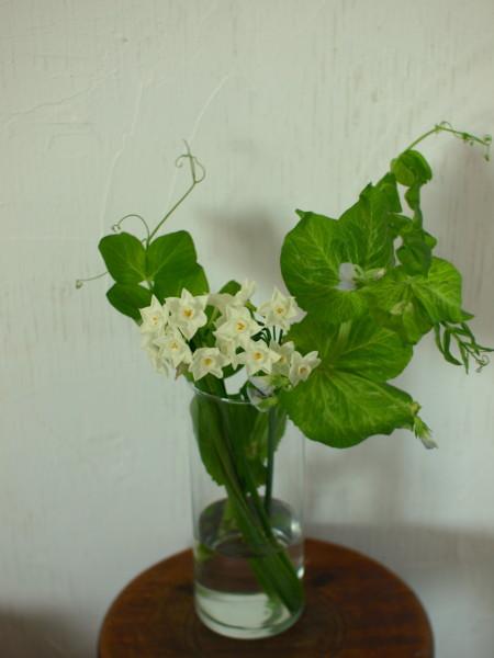 ねこ水仙,豆の花