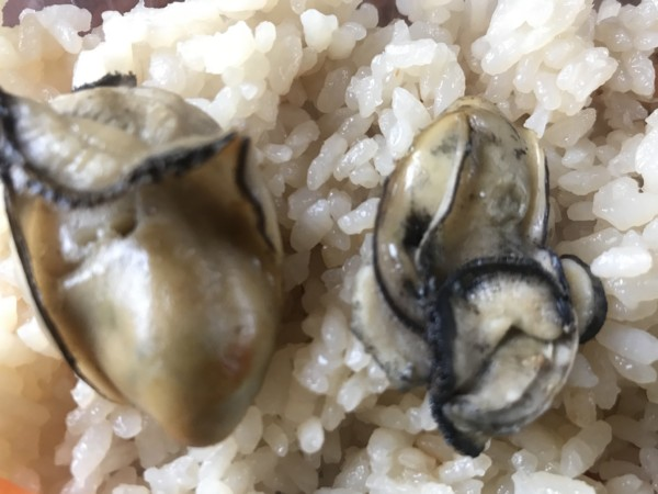 牡蠣小屋 牡蠣飯