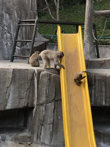 福岡市動物園 サル山