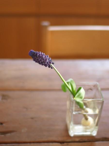 ムスカリ 切り花