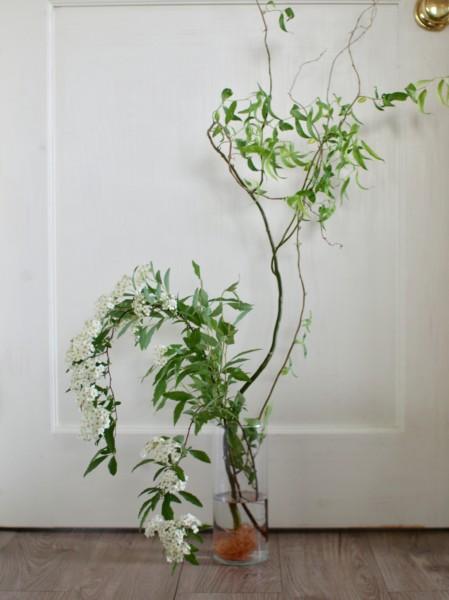 コデマリ 雲竜柳