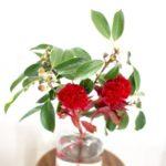 ドングリ切り花